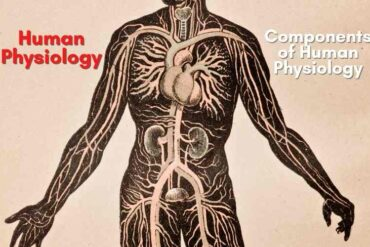 Human Physiology and it's components